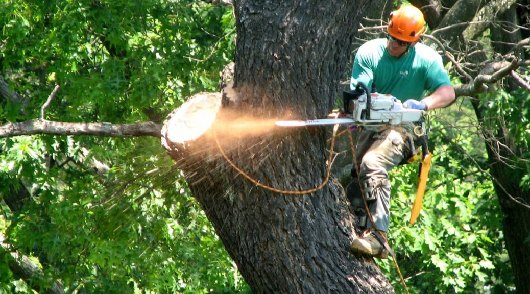 Tree Service Environment Friendly Professional Assistance