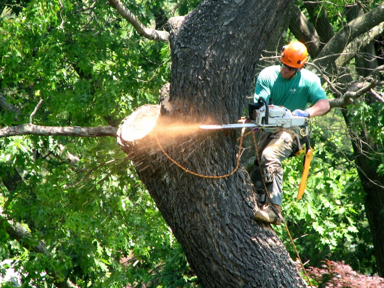 Image result for tree trimming service